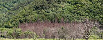被災地と東北の森はいま