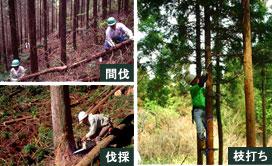 img-foresttype-edauchi
