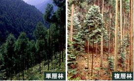 img-foresttype-jinkourin