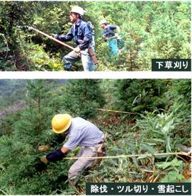 img-foresttype-shitakusa