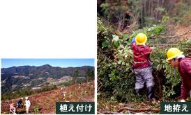 img-foresttype-uetsuke