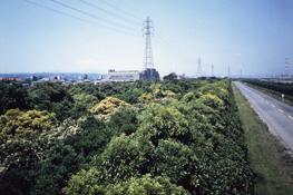 大分製鐵所の環境保全林