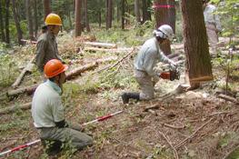 『KOA森林塾』で学ぶ間伐技術