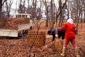 雑木林の落ち葉を使っての堆肥づくり(埼玉)