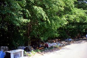 雑木林へのゴミ廃棄も問題に