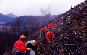 山火事跡地でのボランティアによる植樹(岐阜)