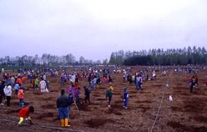 「帯広の森」での植樹(北海道) 1994年