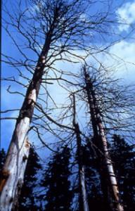 酸性雨で枯れた森林(チェコ 1992年)