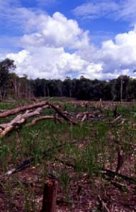 焼き畑(インドネシア・カリマンタン1996年)