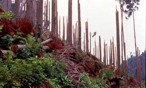 台風19号による森林被害(大分)