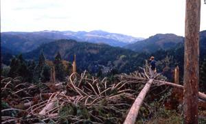 台風19号による森林被害(石川)