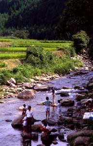 豊かな森林が豊かに水を育みます