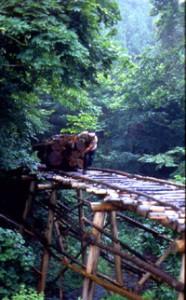 木馬(きんま)による木材の 運び出し(栃木 1985年)