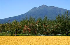 岩木山と水田とりんご畑