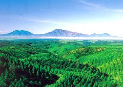 阿蘇山と周辺に広がる森林