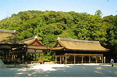 文化の森(上賀茂神社の後背林)