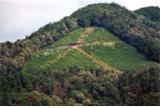 京都の夏を代表する伝統行事にも、 企業の森づくりが貢献