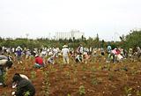 「残波しおさいの森」植樹活動