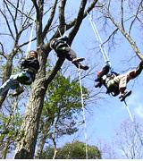 冒険の森のプログラムの一例  木登り体験