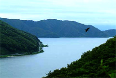 滋賀県の森林面積は琵琶湖の3倍。 豊かな森林がマザーレイクを育みます (奥琵琶湖パークウェイからのながめ)