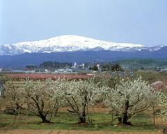 ふもとにブナ林を抱く春の月山